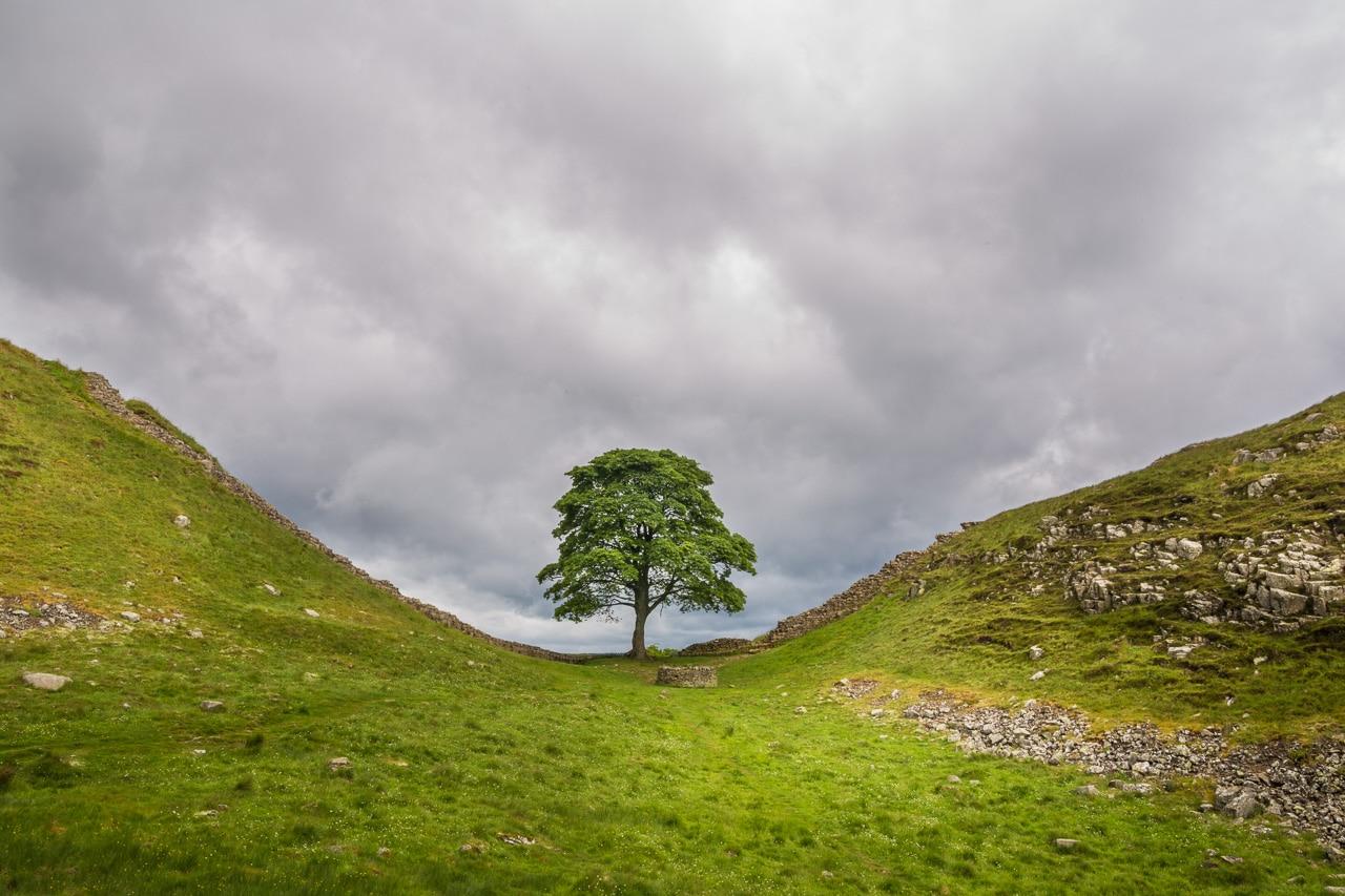 Sycamore Gap Tree von Martin Ziaja Photography